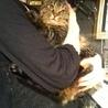 仮名 魔人ぶぅ 8kg超えの巨大猫 サムネイル3