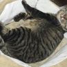仮名 魔人ぶぅ 8kg超えの巨大猫 サムネイル2