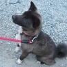 多頭飼育現場の愛情不足犬カンナ サムネイル3