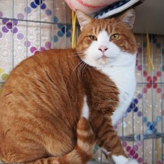 ドラえもんみたいな猫♂のび太くん