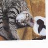 あまえんぼうな子猫 4・5ヶ月