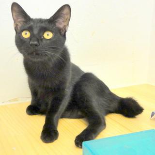 大怪我をして右後足のないメスの黒猫。元気です!