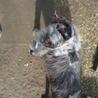 多頭飼育崩壊寸前のお宅の犬です! サムネイル4