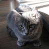 飼育放棄された子猫達 サムネイル3