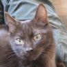 飼育放棄された子猫達 サムネイル2
