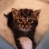 子猫の里親さん募集!【関西】