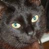 【急募】家主が亡くなってしまった黒猫ちゃんです