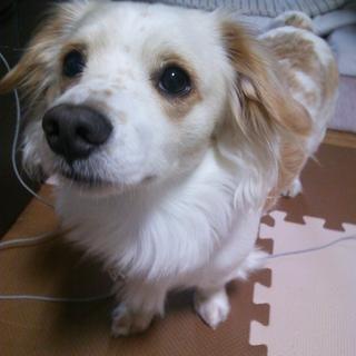 1歳 ミックス犬 里親募集中 お願いします!