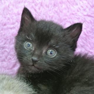 元気いっぱい黒猫の男の子♪