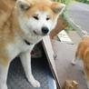 仔犬と一緒に捨てられた母犬