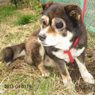 本日17時まで!!両目視力を失った犬…