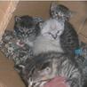 可愛い3匹姉妹