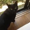 人間大好き黒猫ちゃんの家族を探しています。