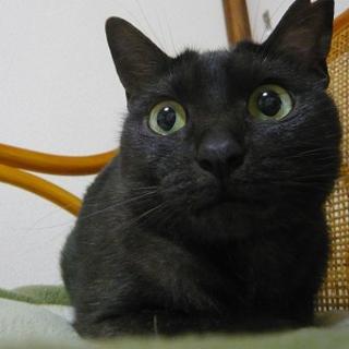 ビビリで固まる母猫さん