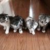 子猫の里親探してます