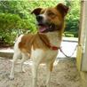 広島県動物愛護センターの譲渡犬です!