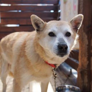 福島約3年生き延びていた!スリスリ犬の幸ちゃん♀