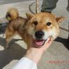 里親様決定♡【殺処分決定】広島県動物愛護センター
