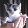 生後一ヶ月の子猫、里親を募集します。