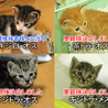 一ヶ月半の子猫(愛知県・他県にもお届けします)