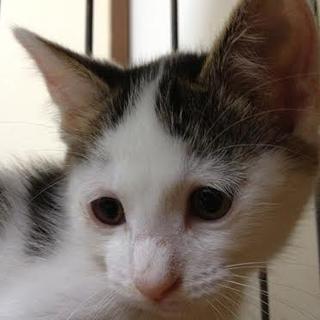子猫 メス 仮名「一二三(ひふみ)」
