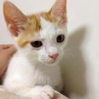 子猫 オス 仮名「四万十(しまんと)」
