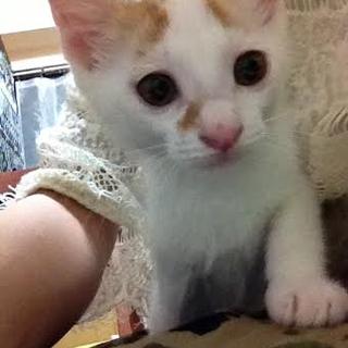 子猫 オス 仮名「六空(ろっく)」