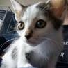 子猫 お目々が大きい! 仮名「デメタンちゃん」
