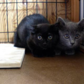 黒子猫のチェリー♥女の子♥3が月手術済