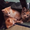 子猫ちゃん4匹います☆里親さん募集です★