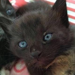 好奇心旺盛な黒猫の女の子