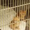 多くの仔猫がセンターに収容されています