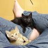 仔猫の兄弟2匹の里親さんを探しています!