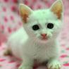 ちょっぴり困り顔 白猫ココちゃん♪
