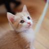 かわいい子猫の里親さま、大募集!