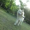 モフモフの迷子雄犬 サムネイル3