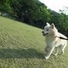 モフモフの迷子雄犬 サムネイル5