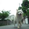 モフモフの迷子雄犬 サムネイル2
