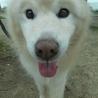 モフモフの迷子雄犬 サムネイル4