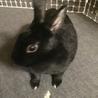 ミニウサギの女の子です