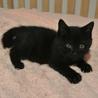 人なれ完璧、こぐまのような黒猫、うみくん