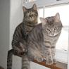 飼育放棄された子猫達 サムネイル5