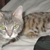 飼育放棄された子猫達 サムネイル6