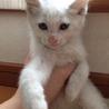 生後2ヶ月位 可愛い兄妹仔猫たち