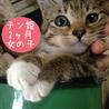 2ヶ月くらい キジ猫テンちゃん