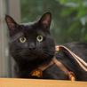 人間大好き、甘えん坊の黒猫 喜希くんです サムネイル3