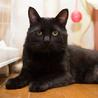 人間大好き、甘えん坊の黒猫 喜希くんです サムネイル4
