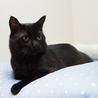 人間大好き、甘えん坊の黒猫 喜希くんです サムネイル5