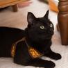 人間大好き、甘えん坊の黒猫 喜希くんです サムネイル6