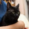 人間大好き、甘えん坊の黒猫 喜希くんです サムネイル7
